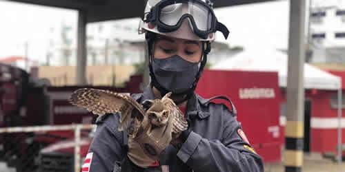 Bombeiros resgatam Coruja em residência em Jequié – BA