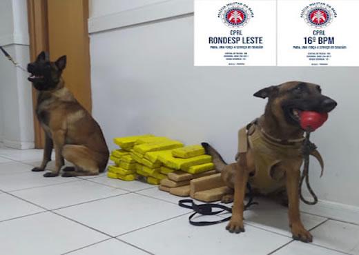 Cachorro policial da Guarnições da Peto, Rondesp e Comando,