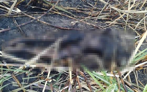 Irmãos são assassinados a tiros e corpos são carbonizados em canavial no interior de Mucuri – BA
