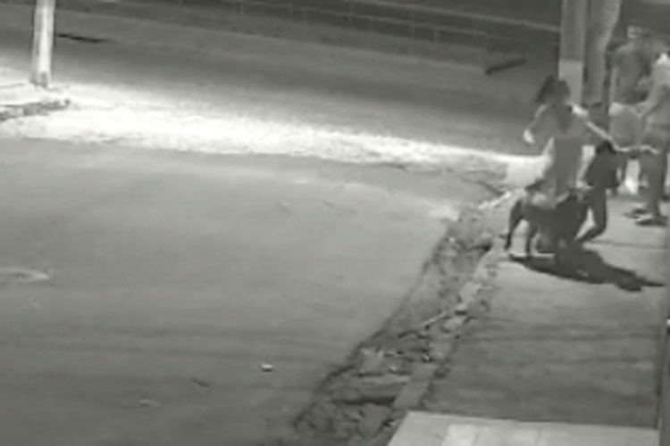 Vídeo mostra pitbull atacando menino em Brumado – BA
